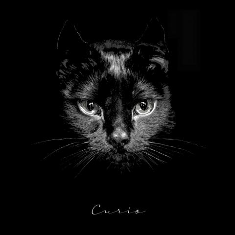 High Gloss on Aluminium, Black Cat with Signature Portrait treatment